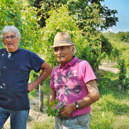 Grasso Fratelli Treiso - Rotweine