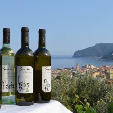 Cantina Sancio Spotorno - Rotweine